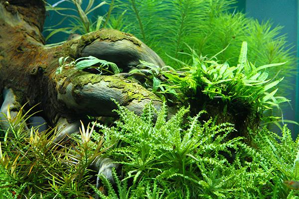 Planted_Aqua_1