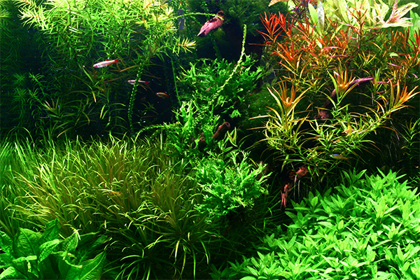 Planted_Aqua_3
