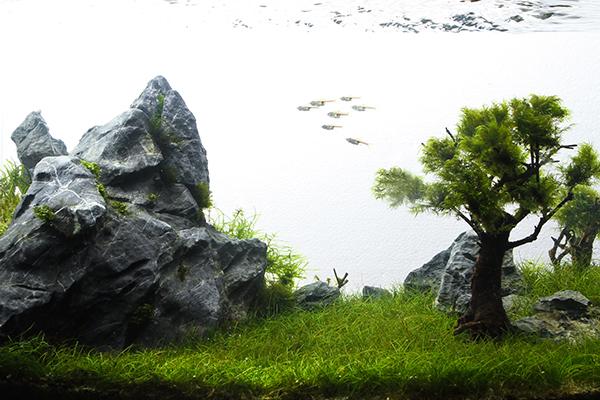 Planted_aquarium_4