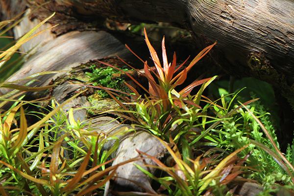 Planted_aquarium_5