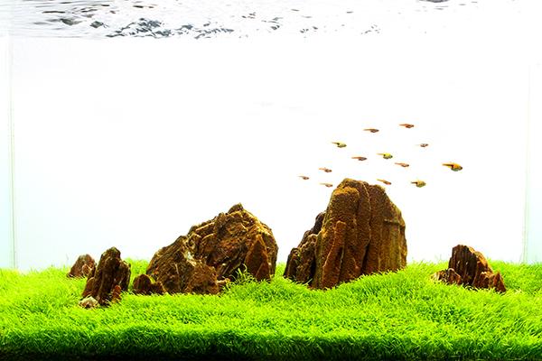 Planted_aquarium_7