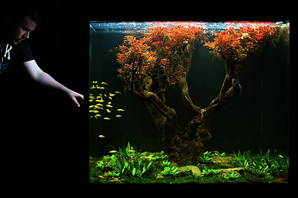 ADM_Planted_aquarium_Aquascaping_Tree
