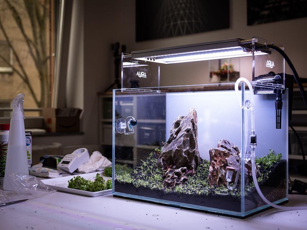 akvarium_start